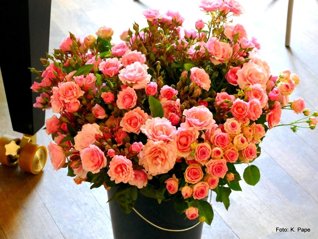 Blumen; Rosa Rosen; Für Musikanten;